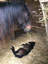 Luna et Negrita-jour naissance