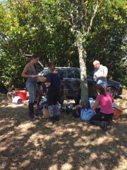piknik adultes