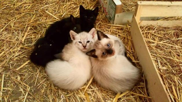 compter les chatons