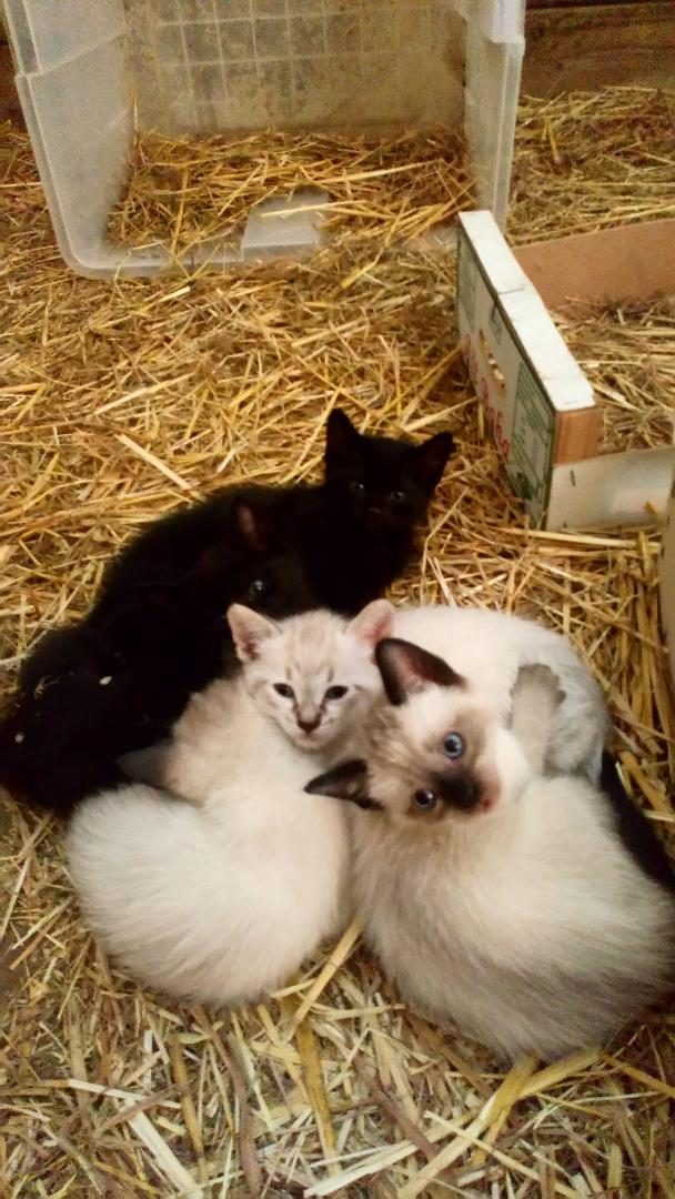 compter les chatons2