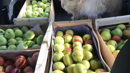 livraison de pommes