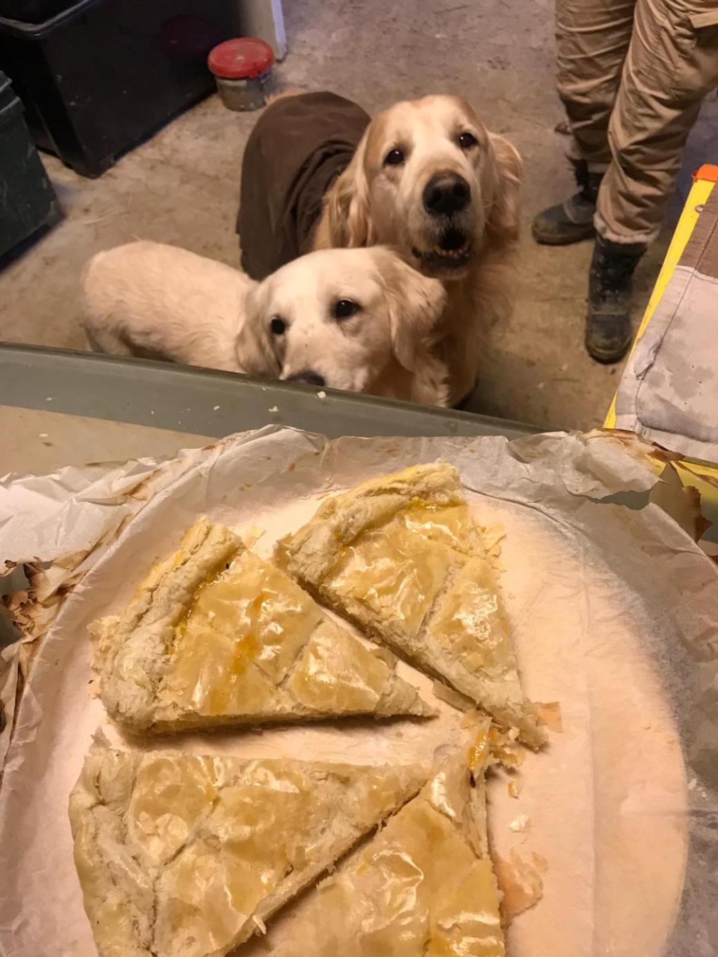 chiens et galette